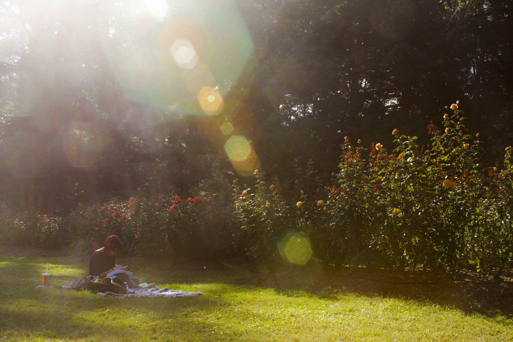 The Rose Garden | Katperture Photography